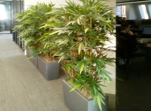 Office Plants Corridors