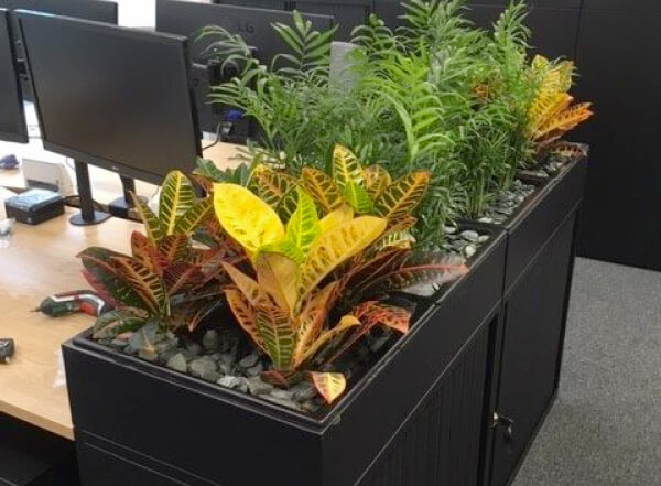 Office Plants Desks